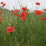 Fleurs 020 Min